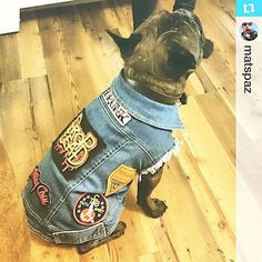 Nashville the Frenchie looking super badarse in his new battle jacket! ⚡️ How awesome is this guy!!? ******************************************** #battlejacket #patchedup #pethaus #frenchie #frenchbulldog #squishyfacecrew #weeklyfluff #kiss #motleycrew #badtothebone #instadog #insta_dog #madeinmelbourne ・・・Nashvilles @hellopethaus cut-off denim jacket arrive and we got it all patched up! We all have cut-offs now! #coolgang #frenchbulldog #frenchie #frenchiesofinsta @luluknievel #pethauspack