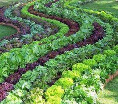 História Real: A viabilidade comprovada de Outra Agricultura