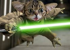 PetsLady's Pick: Funny Lil Yoda Bub Of The Day ... see more at PetsLady.com ... The FUN site for Animal Lovers