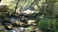 Paisaje senda fluvial río Arenterio Plants, Scenery, Fotografia, Plant, Planets