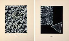 laure albin guillot micrographie décorative - Google Search