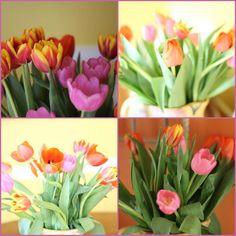 FRIDAY FLOWERS: TULIPS