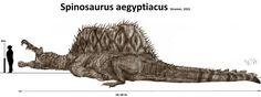 Spinosaurus aegyptiacus by Teratophoneus on DeviantArt