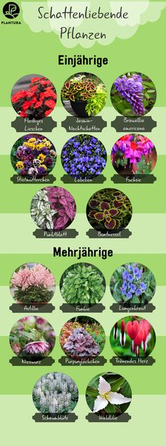 Plants for the shade - Gärtnern Hydrangea Seeds, Marker Crafts, Belle Plante, Plants Are Friends, My Tea, Engagement Ring Cuts, Succulents Garden, Low Lights, Celebrity Weddings