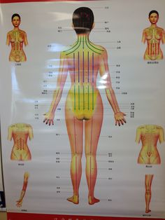 Guasha massage chart  Posterior Female