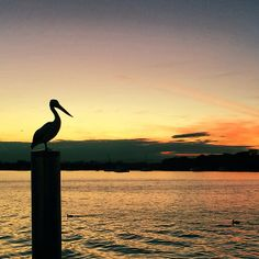 #ShareIG #sunset at The Boathouse last week. I love these amazing creatures. I love this place!
