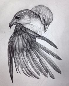 Discovered by ola. Find images and videos about art, drawing and bird on We Heart It - the app to get lost in what you love. Love Birds Drawing, Bird Drawings, Animal Drawings, Pencil Drawings, Eagle Drawing, Wings Drawing, Animal Sketches, Drawing Sketches, Sketching
