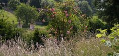 Rose meadow at Easton Walled Gardens