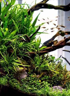 19 best aquascape inspiration images aquascaping fish tanks rh pinterest com