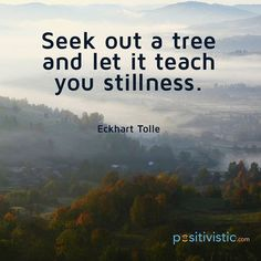Eckhart Tolle - seek out a tree and let it teach you stillness