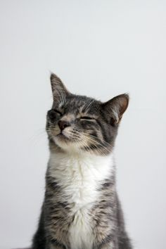 Kittens and like OMG! get some yourself some pawtastic adorable cat apparel!