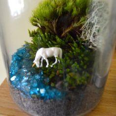 DIY Terrarium Kit Medium Moss Terrarium by TierraSolStudio