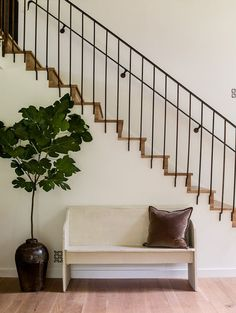 Metal railing detail.   Love the plant...different option than fiddle leaf.  The search is finally over, think this is another type of fig tree known as Italian Fig.