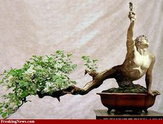 Google Image Result for http://bonsaibark.com/wp-content/uploads/bonsaiwithguy.jpg