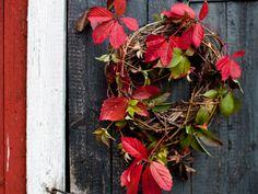 Syyskranssi villiviinistä – Katso ohje: Kotiliesi.fi - Autumn wreath