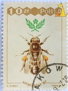 Western Honeybee, Polska, Poland, stamp, insect, bee, K Sliwka, PWPW, 87, Apimondia'87, 10 Zl, Apis mellifera