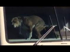 Dog waiting for owners & Собака в ожидании хозяев