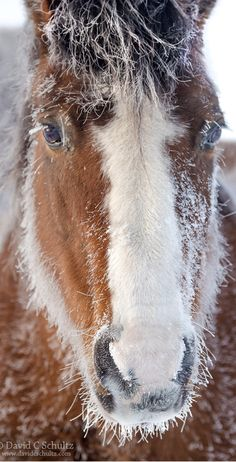 A CHILL IN THE AIR - Wasatch Mountains of Utah #winter horse snow ice cold frosty frost #by David C. Schultz on 500px.com