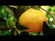 ▶ Naturaleza en Camara Lenta HD - YouTube....THIS IS GREAT, SUCH BEAUTY