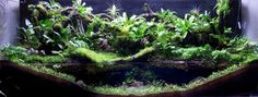 Here are a few ways to make a paludarium suitable for a poison dart frog! Planted Aquarium, Aquarium Terrarium, Aquarium Fish, Reptile Terrarium, Vivarium, Aquascaping, Frog Tank, Poison Dart Frogs, Types Of Animals