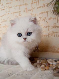 """""""Voeg bij het leven nog een kat, en je krijgt een ongelooflijke combinatie."""" - Rainer Maria Rilke ❤"""