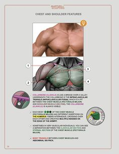 Anatomy Next - anatomy tools, books, links, blog, videos and know-how