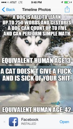wtf: A dog is able to learn up to 250 words and ... Equivalent human age: 3 years. A cat doesn't give a fuck, and is sick of your shit. Equivalent human age: 42 years.