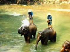 Photos of Mundo Thailand Day Tours, Chiang Mai - Attraction Images - TripAdvisor