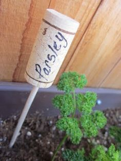 @Betty Phillips Here Mom for all the wine you have been drinking you can now do something with the corks :) LOL Plant markers from wine bottle corks