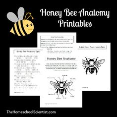Honey Bee Anatomy Printables - TheHomeschoolScientist.com