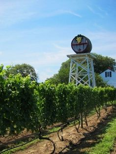 Truro Vineyards of Cape Cod for your Tuscan themed wedding Cape Code, Local Color, Cape Cod Wedding, Most Romantic Places, Ocean Sounds, Boston Strong, Truro, Martha's Vineyard, Outdoor Venues