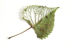 Artist Hillary Fayle fuses delicate plant life with elegant embroidery to explore our connection with the physical world. Using green leaves, dried petals, Embroidery Leaf, Embroidered Leaves, Deco Nature, Art Textile, Brazilian Embroidery, Arte Floral, Fabric Art, Fiber Art, Needlework
