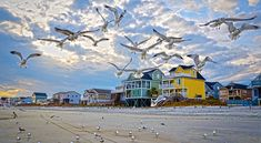 Gorgeous shot of Garden City Beach! One of my favorite Beaches! Garden City Beach, Seaside Holidays, Murrells Inlet, North Myrtle Beach, Sea Birds, Beach Photography, Places To Go, Sunrise, Open Spaces