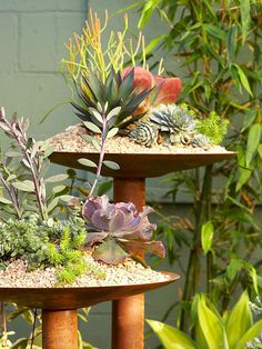 Rusted-Steel Pedestals... Put your plants on a rusty platter for a high-rise display. Experiment with succulents flaunting a variety of textures and growing habits to create a distinguishing arrangement.