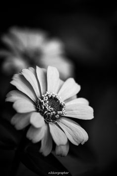 Monochrome flora by Nikkorgraphy (Udhab) on 500px