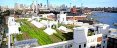 One of Brooklyn Grange's  two rooftop farms in New York City, which total 2.5 acres and produce more than 50,000 pounds of organic produce each year. Photo credit: Brooklyn Grange