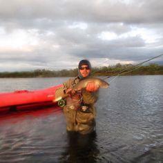 one of those amazing arctic grayling that are pure muscle... it was an awsome trip in the lapish outdoors!  #flyfishing #arcticgrayling #thegraylingparade #lapland #beadheadnymph #northflyfishing