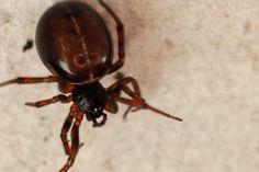 #Makroaufnahme einer #Spinne