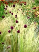 My Favorite Plant Combinations 8 (My Favorite Plant Combinations design ideas and photos is part of Prairie garden - My Favorite Plant Combinations 8 Prairie Garden, Garden Cottage, Prairie Planting, Gravel Garden, Garden Plants, Garden Art, Flowering Plants, Garden Grass, Meadow Garden