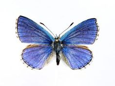 The butterfly that I one day want a tattoo of