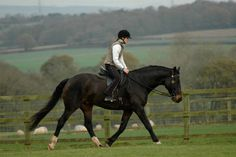 Horse Training Tips - Flexion!  Ready for a more supple, balanced, elastic horse?  Click below to read about Flexion, and Why It's So Important! http://parellinaturalhorsetraining.com/news/flexion-and-why-its-so-important-part-2/