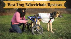 Pet Dog Wheel Chair - Affordable and supportable  If your beloved pet is injured and your pet facing a problem hard to move a step forward. Then the best solution is to buy a wheel chair for it. To get an #affordablewheelchair, you can visit here. https://petdogwheelchair.com/