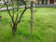 Dettaglio verde in Mortara, comune ben servito e tranquillo non lontano da Pavia e Milano che spesso è il posto migliore per trovare una seconda casa a prezzi accessibili che non hanno nulla da invidiare a zone residenziali esclusive, ma molto più care. Per trovare la tua seconda casa a Mortara affidati a Immobiliare Dicase che opera con successo nella zona da oltre 10 anni: Immobiliare Dicase Piazza Martiri Della Libertà 3, 27036 Mortara (Pavia) Tel. 0384 296 698 #immobiliaredicase