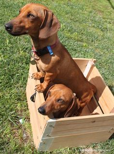 Fun in a box <--- I say Trouble Contained! Hee hee