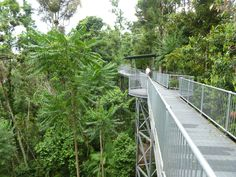 Mamu Walkway near Innisfail - a gorgeous rainforest canopy walk. Great Days Out, North Coast, Long Weekend, Australia Travel, Walkway, Tropical, Explore, Canopy, Kids