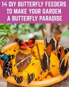 Butterfly Garden Plants, Butterfly Feeder, Diy Butterfly, Butterfly House, Ladybug Garden, Monarch Butterfly, Garden Crafts, Garden Projects, Garden Ideas