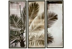 Three Panel Palm Majestic Triptych Print - Photographic Drawings - Art Miami