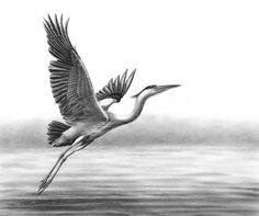 British Wildlife — Nolon Stacey Grey Heron Taking Flight Rembrandt, Green Glass Door, Heron Tattoo, Tattoo Brazo, Crane Tattoo, Grey Heron, Sun And Clouds, British Wildlife, Scratchboard