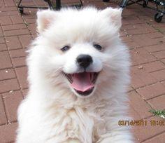 Smiles!  want one sooooo bad!