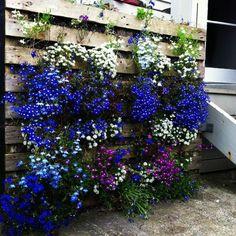 un joli coin de jardin réaliser avec palette de bois, un mur végétal palette abritant de jolies plantes
